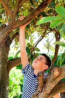 Boy climbing tree