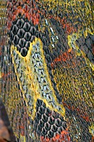 Beautiful snake skin closeup