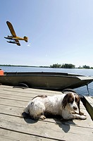 A dog resting on a lake dock beside a motor boat and a Piper Club Float plane flying by
