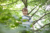 Boy climbing tree outdoors