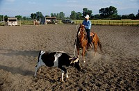 Cowboy on Horseback Roping a Calf