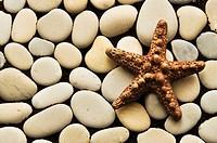 Starfish of brown color on gray, sea, smooth stones