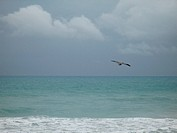 pelican flying over the ocean
