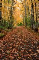 Michigan Forest During Autumn