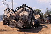 A truck loaded with illegal timber at the river port of Long Binh. The logs were cut illegally in Cambodia.