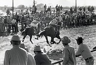 A horse race on the county race track in Carencro, Louisiana.