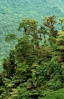 Tropical rainforest covers hillsides in the Braulio Carrillo National Park, Costa Rica