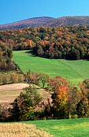 Autumn turns tree leaves red and orange in the Berkshire Mountains including Mount Greylock in Massachusetts.