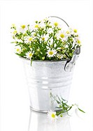 White flowers in a pot