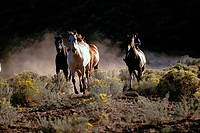 Running the Horses