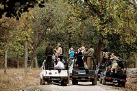 Wildlife watchers observe tigers while touring India´s Bandhavgarh National Park.