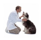 Vet Taking Care of Sheepdog