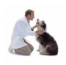 Vet Taking Care of Sheepdog