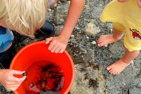 Scandinavian Lifestyle _ catching crabs