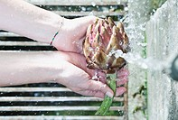 Italy, Tuscany, Magliano, Close up of woman's hand washing artichoke under water