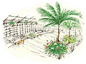 Plants in nursery (thumbnail)