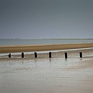 Groyne posts buried in wet sand (thumbnail)