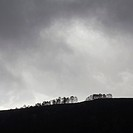 Silhouette of trees under stormy sky
