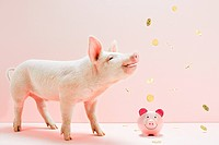 Piglet looking at falling coins over piggybank in studio