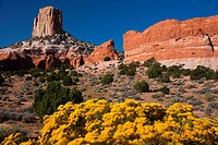Wildflowers bloom in the summer in the red rock country of Arizona