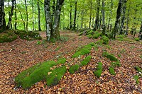Forest in Urbasa, Navarra, Spain