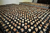 Spilamberto (Modena, Italy): balsamic vinegar bottles at the Museo dell'Aceto Balsamico Tradizionale
