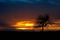 Sunset and lonely tree, orange sky