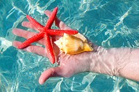 Hand holding starfish and seashell in ripple clean sea tropical water