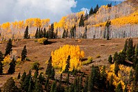 Fall color, Ohio Pass, San Juan Mountains