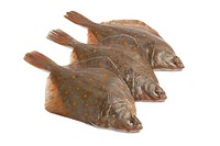 Fresh raw plaice fishes on white background