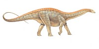 Dicraeosaurus. This dinosaur lived in Tanzania during the Kimmeridgian stage of the late Jurassic.