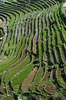Pattern of Ping´an Rice Terraces in China