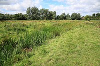 View of unimproved wet grazing meadow habitat, River Dove, Thornham Magna, Suffolk, England, august