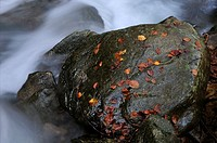 Rock in a mountain creek, Riera de Passavets, Montseny, Catalonia, Spain, Europe