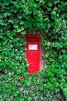 A red Victorian post box in an ivy covered wall