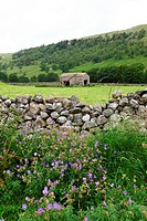 Wild flowers growing by a dry stone wall infront of a stone barn at Arncliffe Litton Dale, North Yorkshire, Yorkshire Dales National Park, England, UK