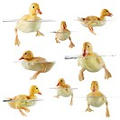 Collage of cute ducklings swimming