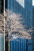 Canada, Quebec, Montreal. Bare trees and modern office building in winter