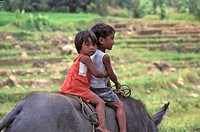 Boy and girl on a Carabao Water Buffalo, Mambucal, Negros Island, Negros Occidental, Philippines