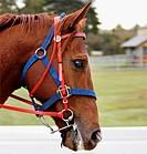 horses head showing his teeth