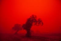 Australia, New South Wales, Ivanhoe, Outback dust storm turns sky red at sunset