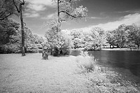The infrared dreamy scenery