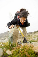 Researcher searching for insects under a rock at Whistler BioBlitz event, Whistler, British Columbia