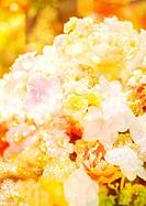 Elegant flowers image