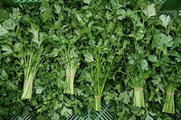 Germany, Upper Bavaria, Weidenkam, Parsley, close up