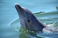 a dolphin swimming in a basin of a biological research station _ therapy with dolphins