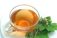 sanicle _ wood sanicle _ tea _ medicinal plant _ herb _ erba fragolina _ pianta medicinale _ t