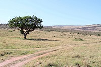 a tree and two cartwheels track on the wide grassland