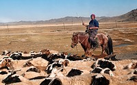 life at a ranch in the Gobi Desert of Mongolia