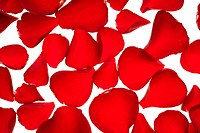 Red rose petals texture background